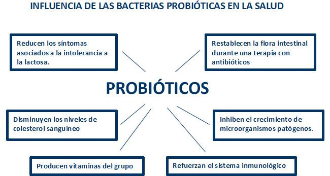 tomar alimentos probioticos para restaurar la flora intestinal