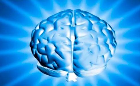 imagen de un cerebro tridimensional
