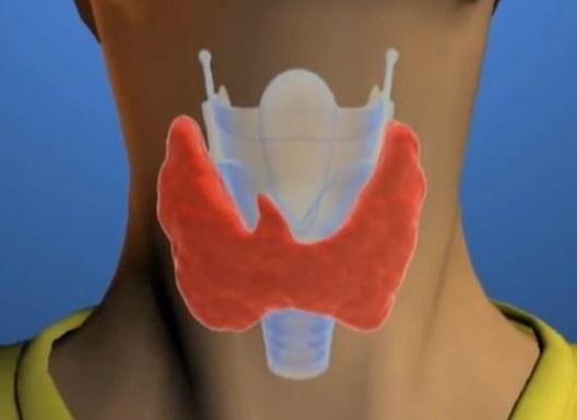 como cuidar de nuestra tiroides