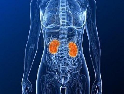 el consumo de medicamentos desgasta los riñones y provoca enfermedades renales