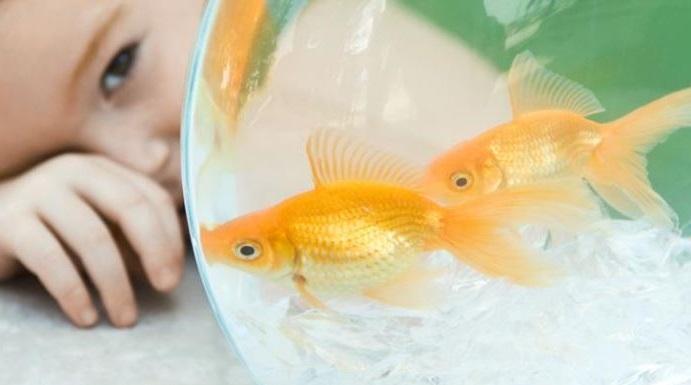 los peces son buenas mascotas para ninos con alergias