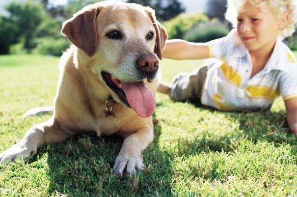 mejores mascotas para ninos alergicos