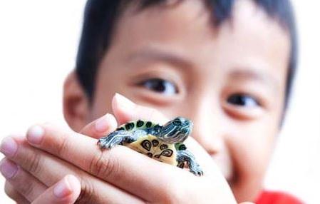 otra alternativa para ninos con alergias son los reptiles
