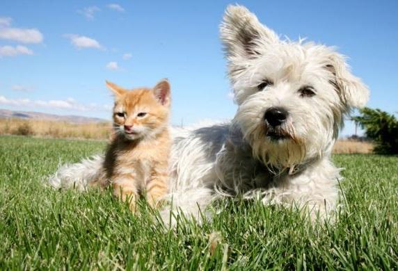 perros y gatos como mascotas