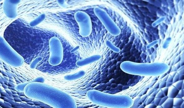 es importante saber elegir bien los probioticos que tomamos