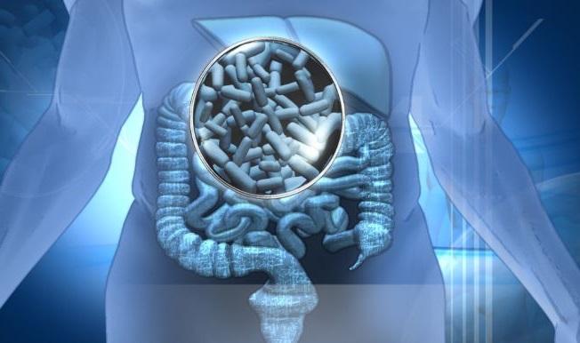 funcionamiento de los probioticos