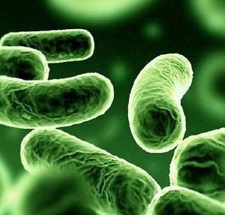 los probioticos son bacterias buenas para nuestro organismo