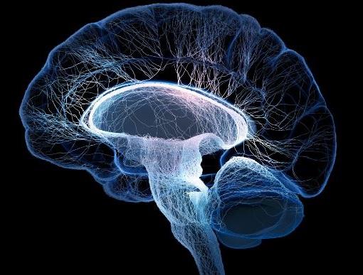 caminar ayuda a agudizar el cerebro