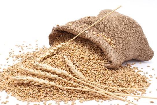 el trigo integral y refinado provoca que envejezcas antes de tiempo debido al proceso de glicacion