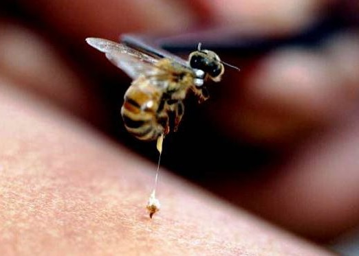 la practica de la apiterapia aporta muchos beneficios sobre la salud de las personas