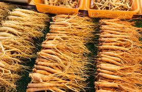 el ginseng se ha utilizado con propositos medicinales desde hace siglos en China
