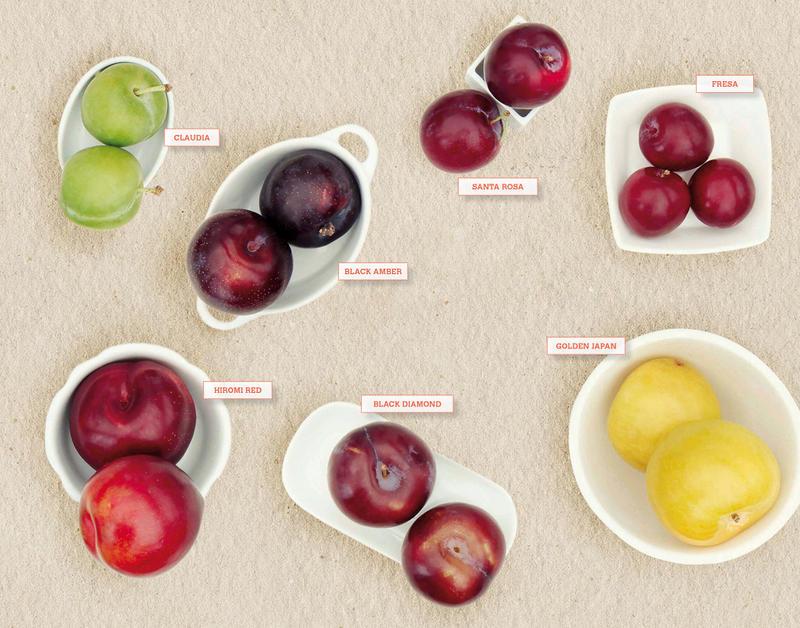 variedades y tipos de ciruela
