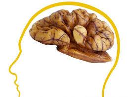 efectos de la nuez sobre el cerebro