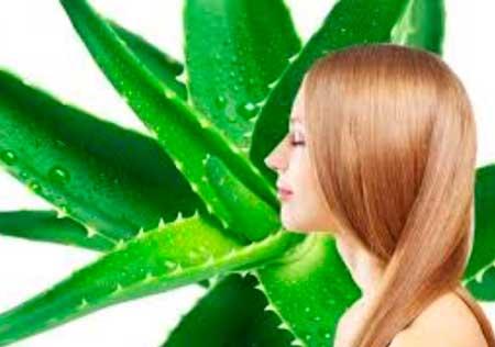 el aloe vera es fantastico para estimular el crecimiento del cabello