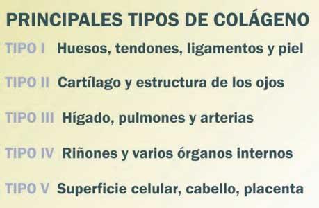 tipos de colageno en el organismo