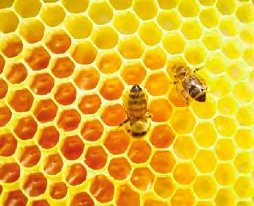 la jalea real es un alimento producido por las abejas obreras