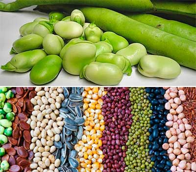 varios granos como habas legumbres y guisantes