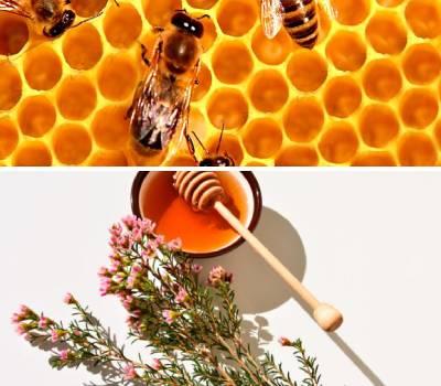 beneficios y propiedades de la miel de abeja