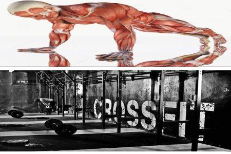 gracias al crossfit se trabajan todos los grupos musculares