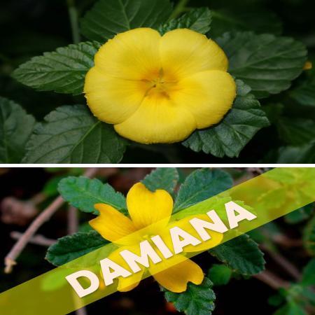 propiedades y beneficios de la damiana
